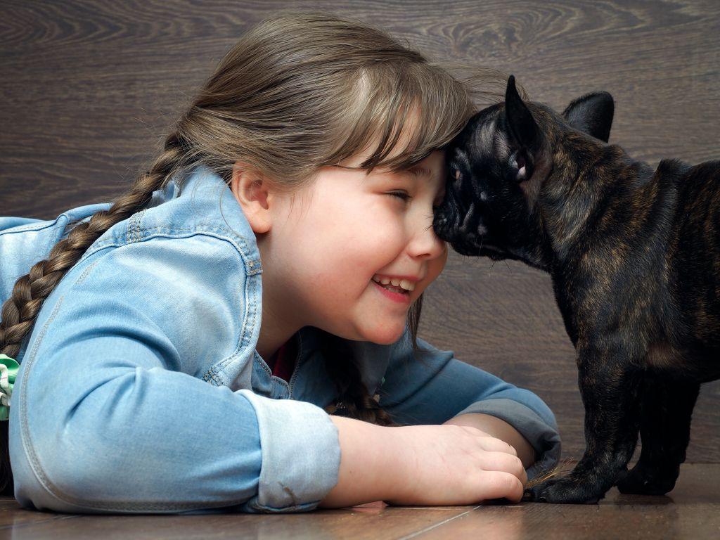 Kinder und Französische Bulldoggen verstehen sich ausgezeichnet