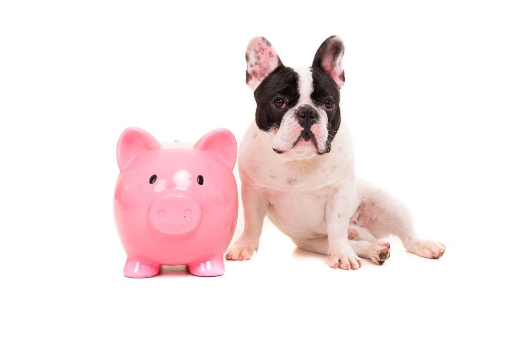Die Kosten für einen Hund müssen vor dem Kauf umsichtig kalkuliert werden