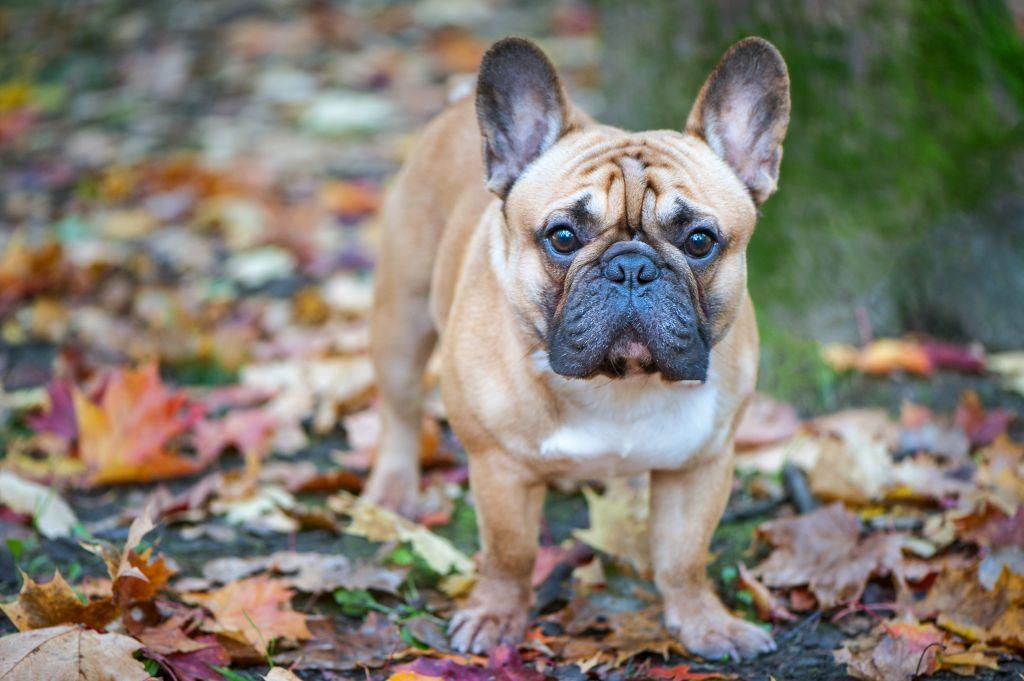Hundefotografie Im Markischen Kreis Und Nrw Diana Klee Fotografie Dachshund Breed Clever Dog Dog Breeds